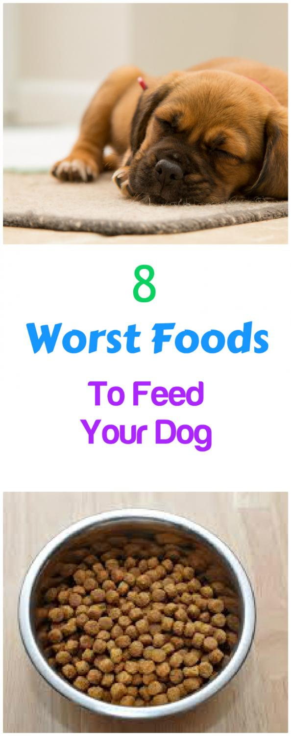 Worst Dog Foods For Your Dog