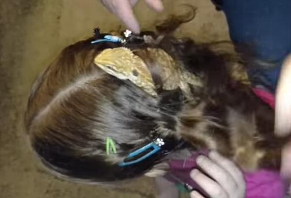 Lizard Caught In Girl's Hair