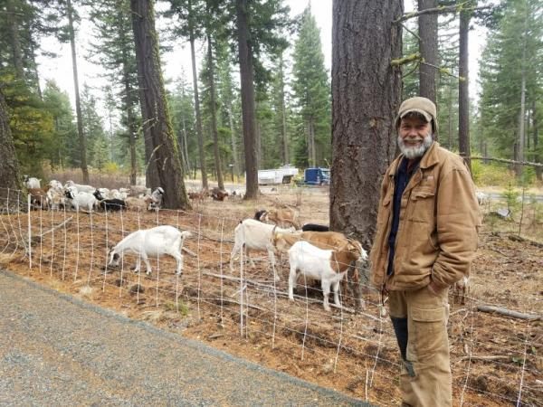 Goats at Work in Washington