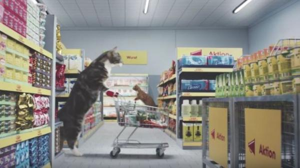 Shopping cat with shopping cart.