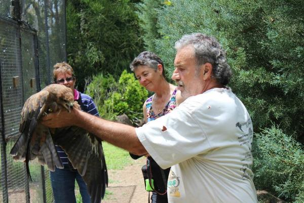Kunz Releases a Rehabilitated Raptor