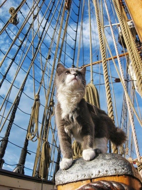 Cat on Board Ship