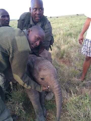 Baby Elephant Being Returned To Mom (Image via The Dodo)