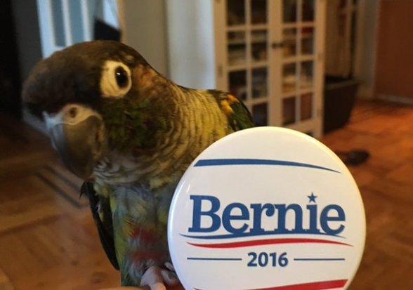 Birds for Bernie