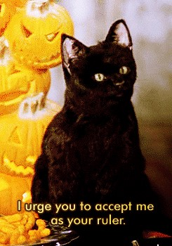 Salem at a Halloween Party (Image via Facebook)