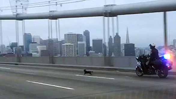 Chihuahua Police Chase