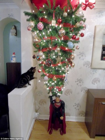 Storm the Kitten and the Family Christmas Tree