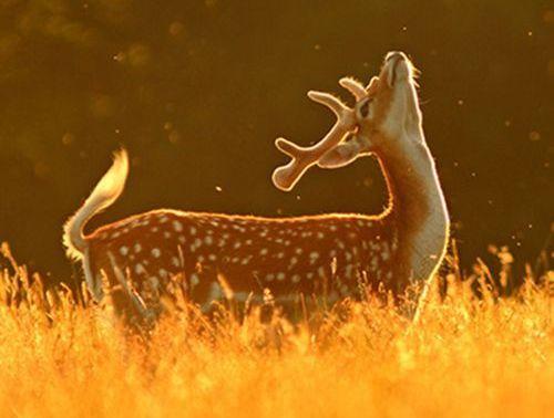 Young Buck (Image via Pinterest)