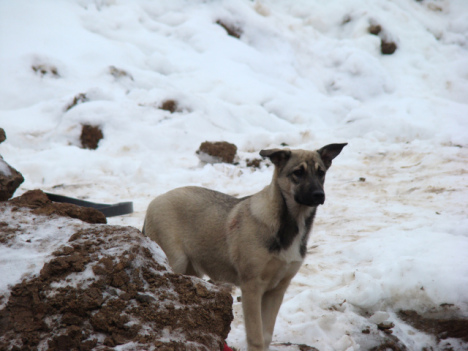 A Stray Dog in Russia (Photo by Audrey/Creative Commons via Wikimedia)