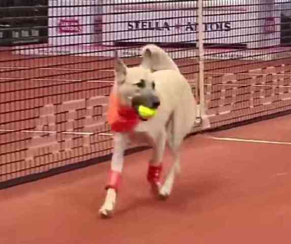 "Tennis ""Ball Dog"""