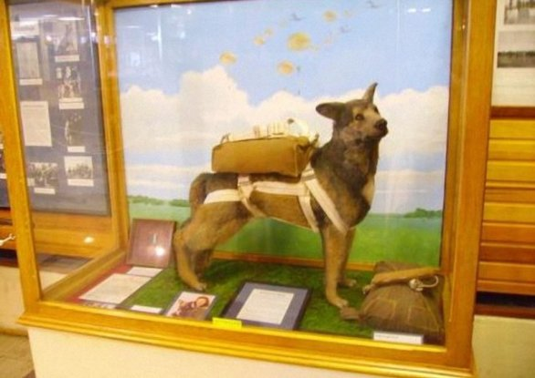 A Replica of Bing on Display at a Museum in Duxfor, England