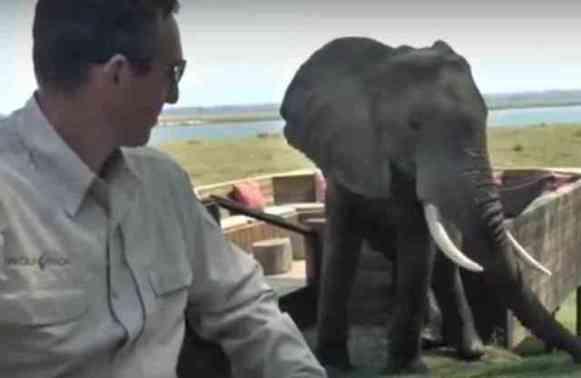Elephant Attacks Picnic (YouTube Image)