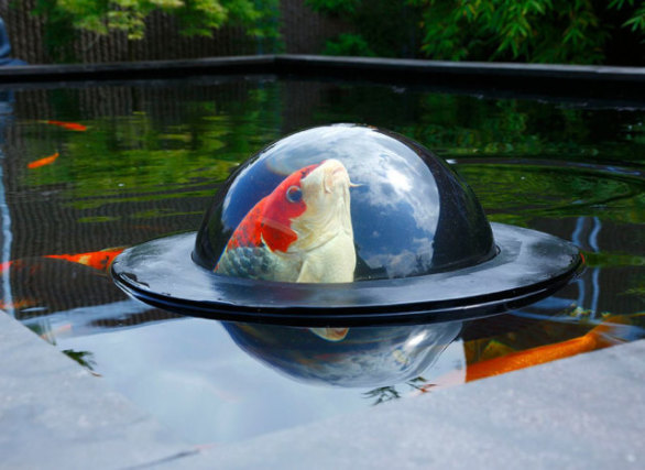 Floating Fish Dome (Image via YouTube)