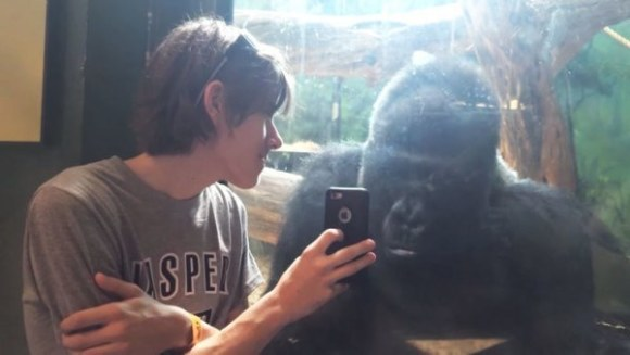 Man Showing Gorilla Photos on his Cell Phone (YouTube Image)