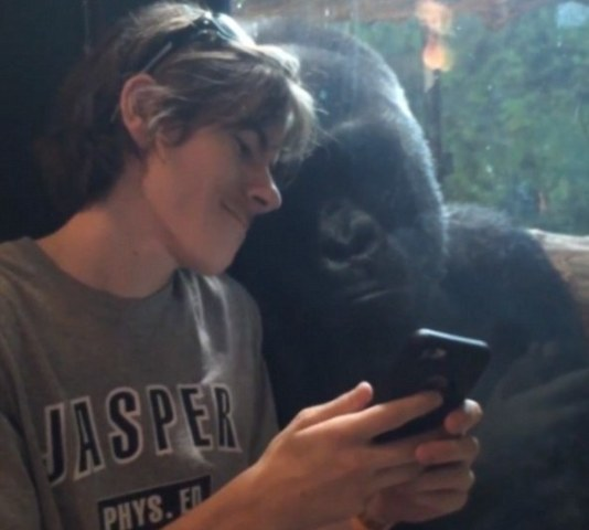 Man and Gorilla Share a Selfie (YoTube Image)
