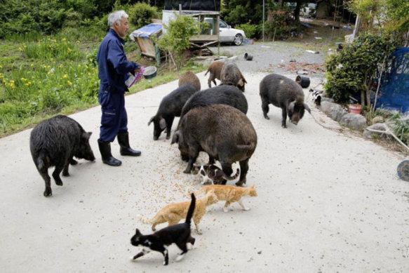 """Matsumura Interacts with """"His"""" Animals"""