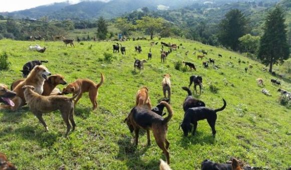 Territorio de Zaguates -- Land of the Strays