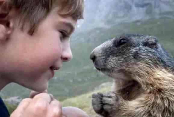 Matteo and a Marmot (You Tube Image)