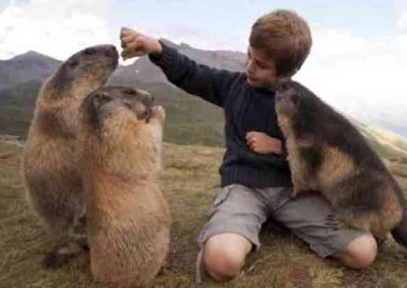 Matteo and Marmots (You Tube Image)