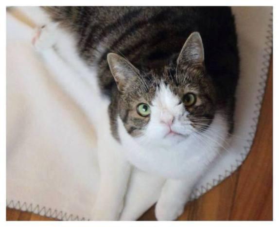 Monty the Cat (Image via Facebook)