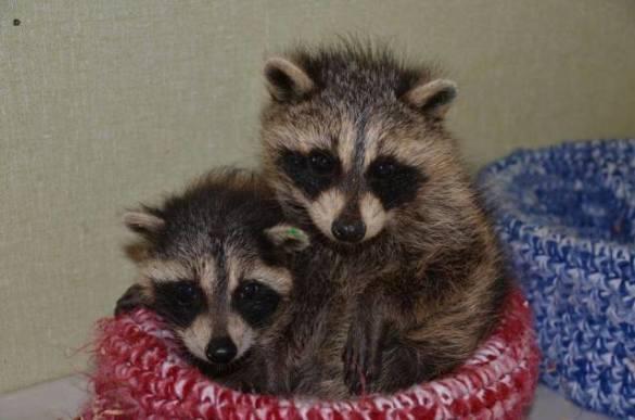 Wildlife Rescue Nests (Image via Facebook)