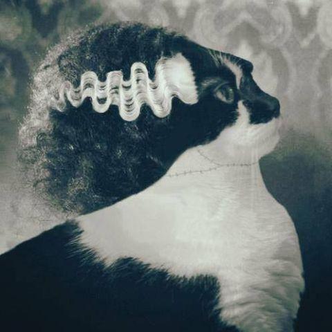 Frankenstein's Cat (Image via flickr)