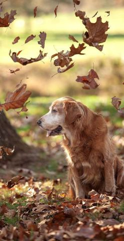 Dog with Falling Leaves (Image via flickr)
