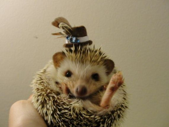 Thanksgiving Hedgehog (Image via Buzzfeed)