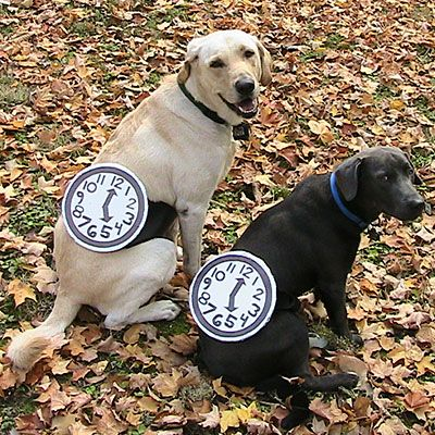 Watch Dogs (Image via Southern Living)