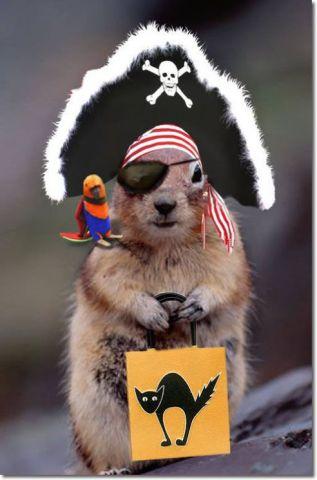 Pirate Squirel (Image via Pinterest)