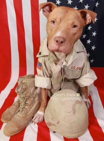 Army Dog (Image via Dirty Paws Photography)