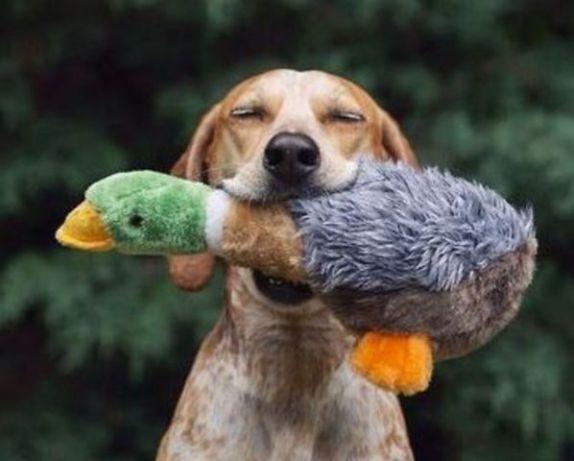 Dog with his Duck (Image via tumblr)