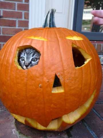 Kitten in a Jack-O-Lantern (Image via Cutest Paw)