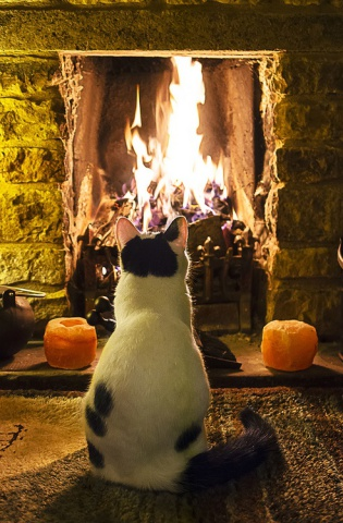Cat in Front of the Fire (Image via tumblr)