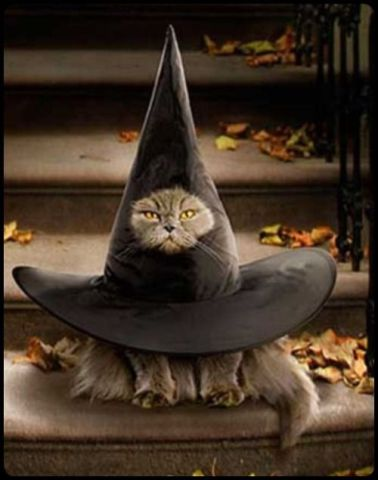 Cat in a Witch's Hat (Image via tumblr)