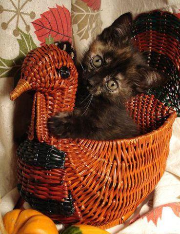 Kitten Centerpiece (Image via Hello Adorable)
