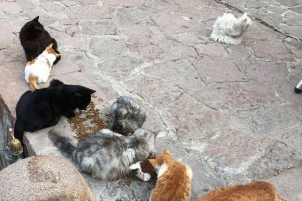 Kunkush the Refugee Cat