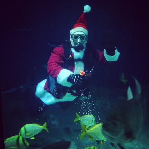 Scuba Santa (Image via The National Aquarium)