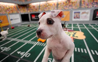 Puppy Bowl VII pup: image via animal.discovery.com