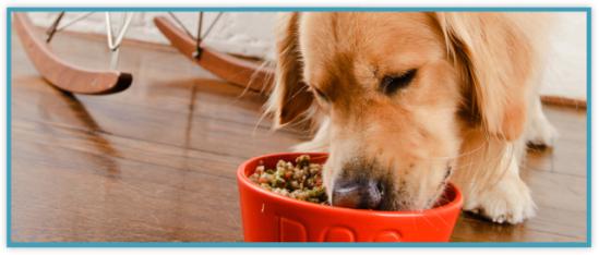 DooD, meet Dog: ©DooD