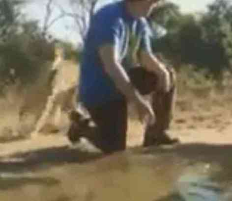 Adam Sandler bends down to get water to give the cheetah. (You Tube Image)