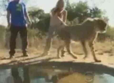 The cheetah, having had his fun, is sent on his way. (You Tube Image)