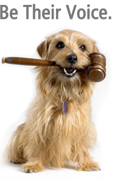 Report animal cruelty: © ASPCA