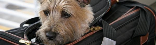 Airline pet policies are changing