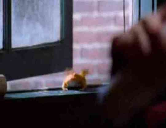 "Albino Pacman Frog in Television Show ""Dead Like Me"" (You Tube Photo)"