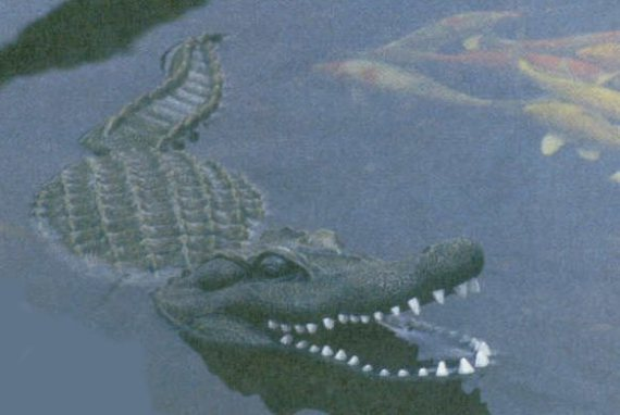 Floating Alligator Decoy