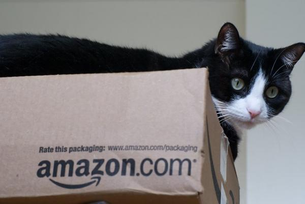 Amazon Calm: The Top 10 Amazon Box Cats