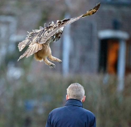 Owl Loves Landing on Heads (Image via Imgur)
