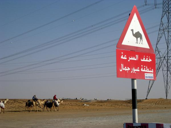 Camel Road Crossing Sign