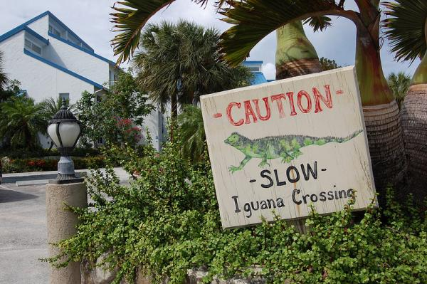 Slow Iguana Road Crossing Sign